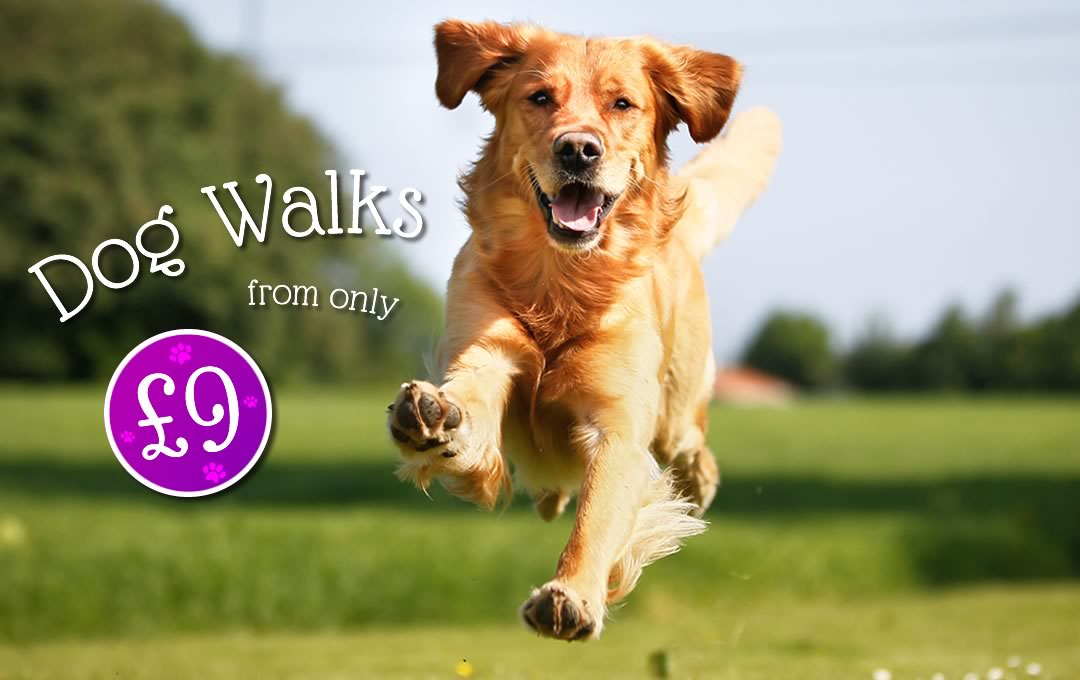 Dog Walkers in Swindon, 1/2 Hour walking, 1 hour walks