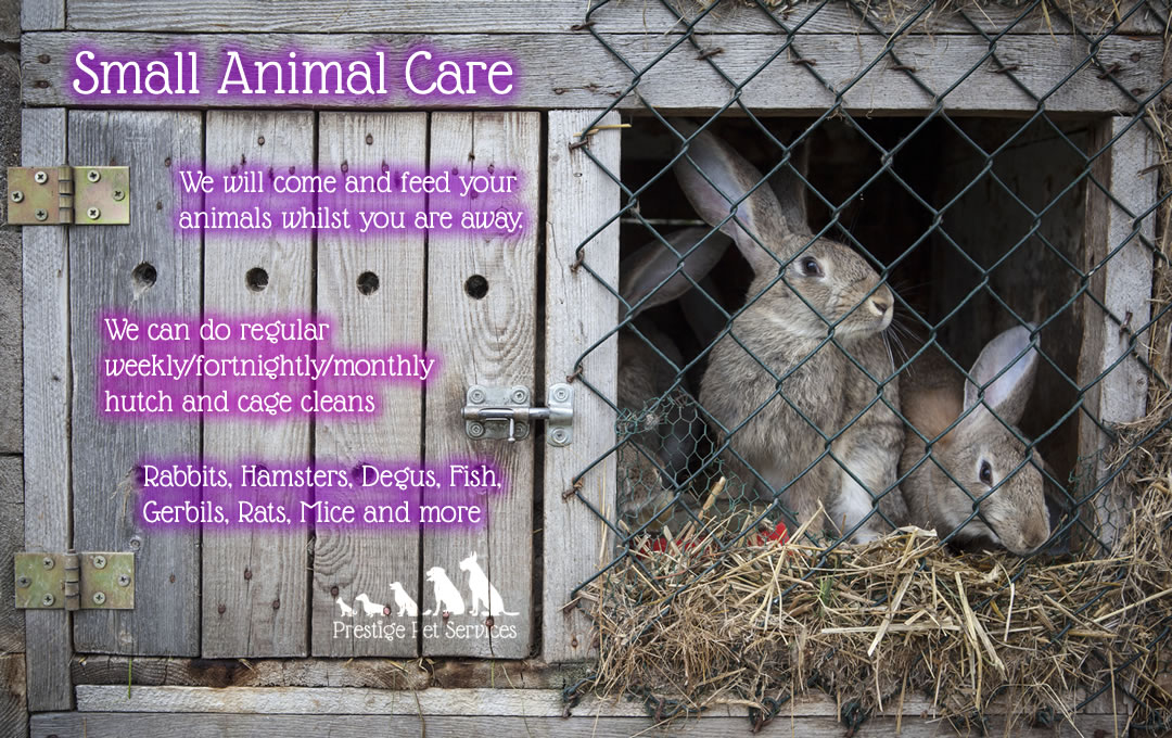 Small Animal Care in Swindon, Wiltshire