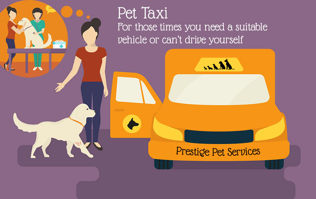 Pet Taxi Swindon